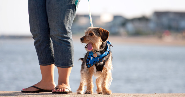 What to Pack When Taking Your Dog to Doggy Daycare