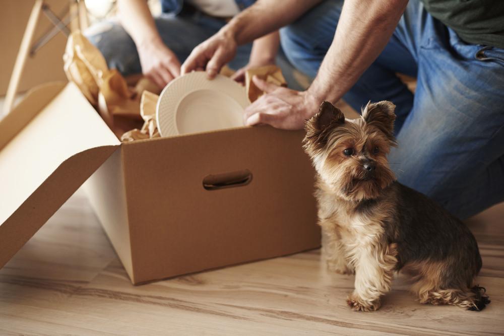 Dog Boarding Reservations: Debunking the myths
